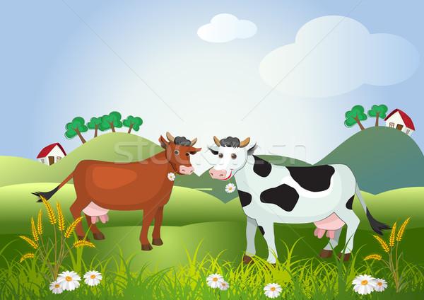 Two cows on meadow fields Stock photo © denisgo