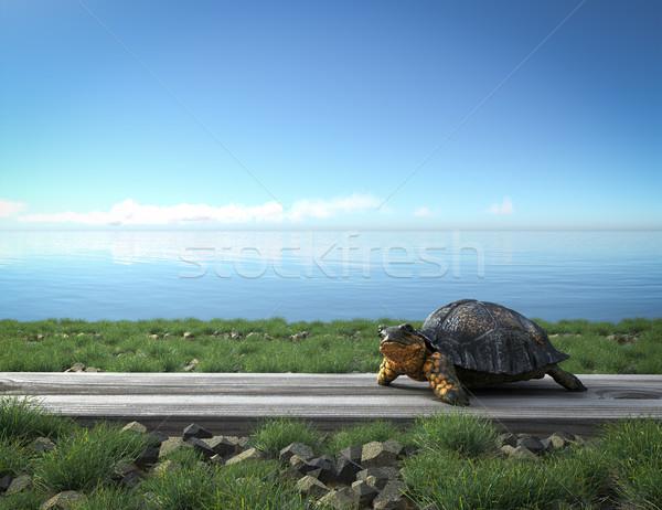 Stock fotó: Kicsi · zöld · teknős · tengerpart · turizmus · fű