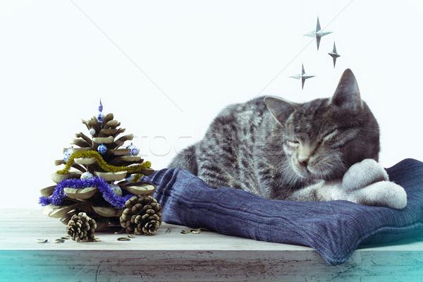 Adormecido gato inverno janela criança casa Foto stock © denisgo