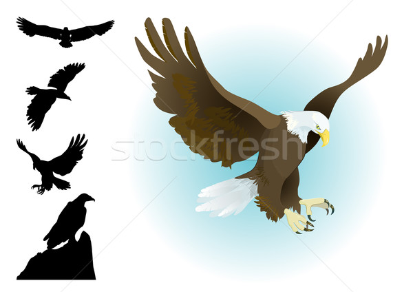 collection of eagles landing,flying, sitting with silhouettes set Stock photo © denisgo