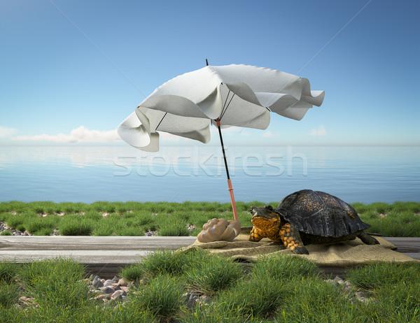 Pequeño verde tortuga playa turismo vacaciones Foto stock © denisgo
