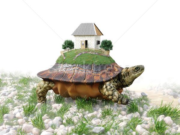 Schildpad speelgoed huis papier onroerend business Stockfoto © denisgo