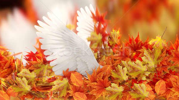 Isolated Autumn Leaves and dove wings on black conceptual background Stock photo © denisgo