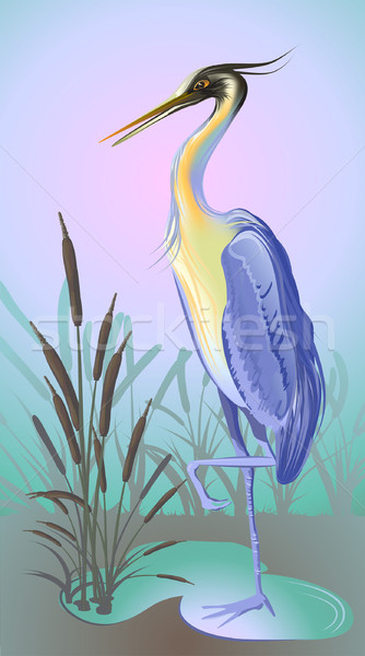 heron with reed and water Stock photo © denisgo