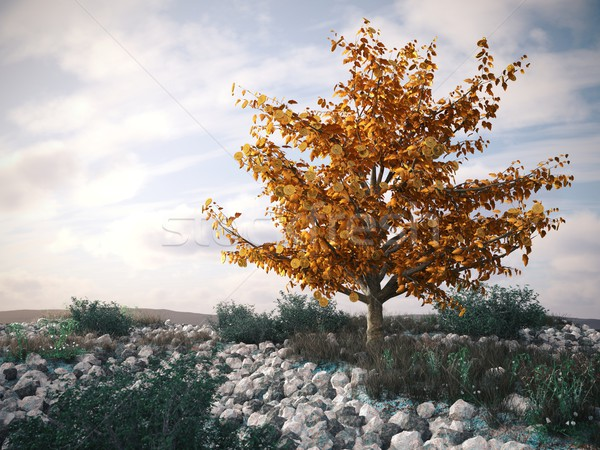 Money tree çöl manzara simge başarılı iş Stok fotoğraf © denisgo