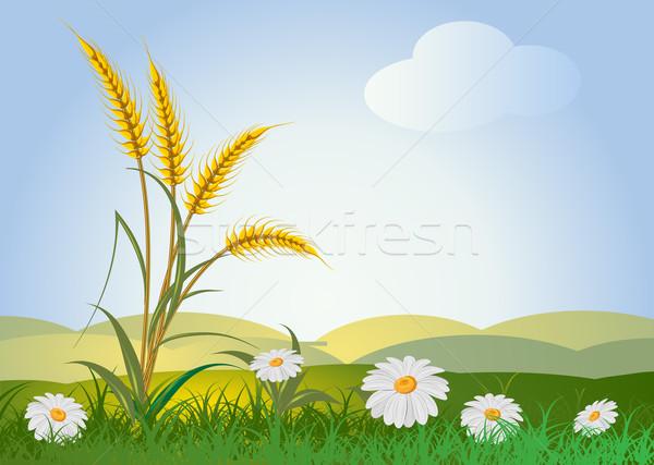 Kulaklar buğday manzara gökyüzü çiçekler çim Stok fotoğraf © denisgo