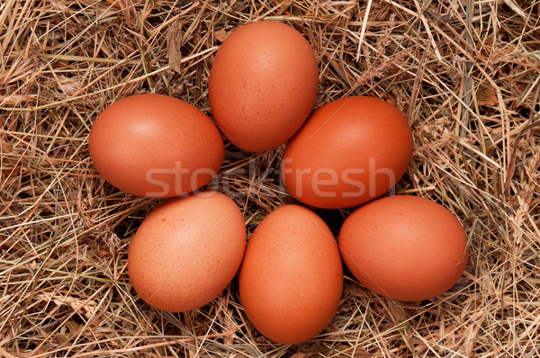Eggs in nest Stock photo © DenisNata