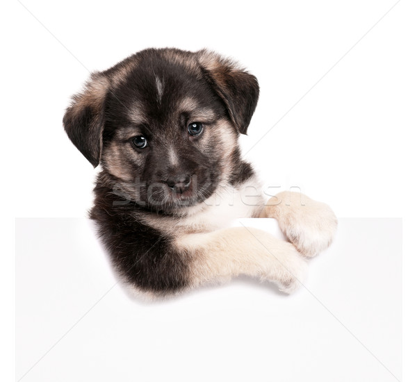 Puppy with paper Stock photo © DenisNata
