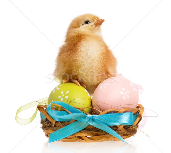 Little chicken in nest with Easter eggs Stock photo © DenisNata
