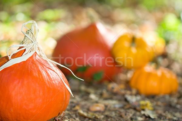 Automne légumes photo bois Photo stock © Dermot68