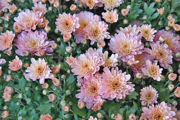 Spanish Flowers in the Parcs Stock photo © Dermot68