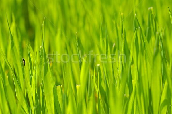 Herbe verte photo détails paysage domaine câble Photo stock © Dermot68