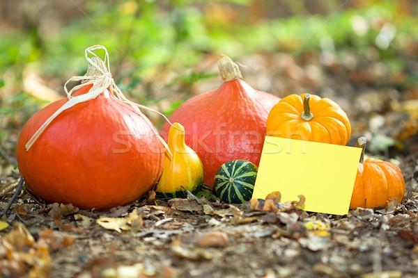 Najaar wenskaart foto plantaardige Stockfoto © Dermot68