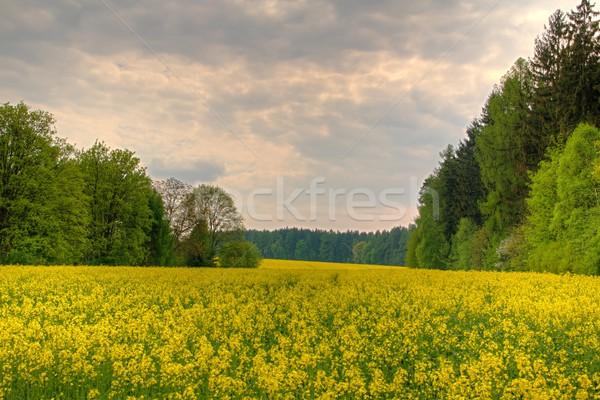 Geel veld bomen foto landschap kabel Stockfoto © Dermot68