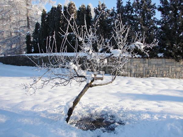 写真 冬 雪 ストックフォト © Dermot68