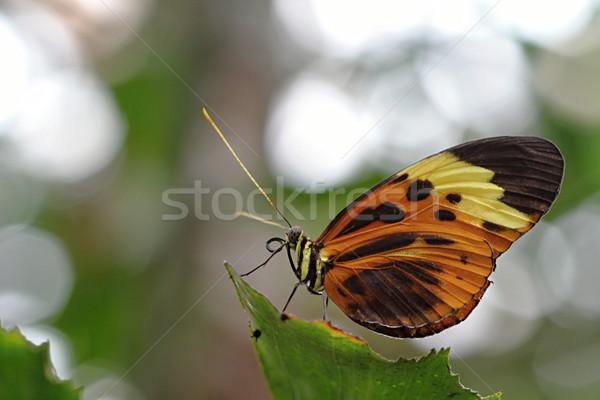 Colorido borboleta foto detalhes parque flor Foto stock © Dermot68