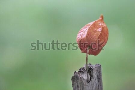 秋 花 木材 写真 遅い 時間 ストックフォト © Dermot68