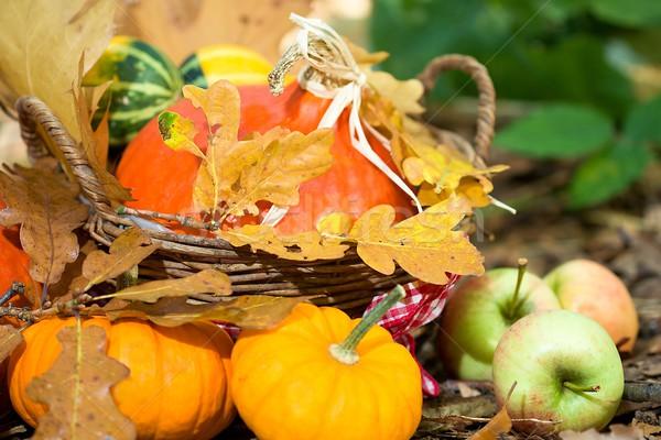 Outono vegetal foto madeira Foto stock © Dermot68