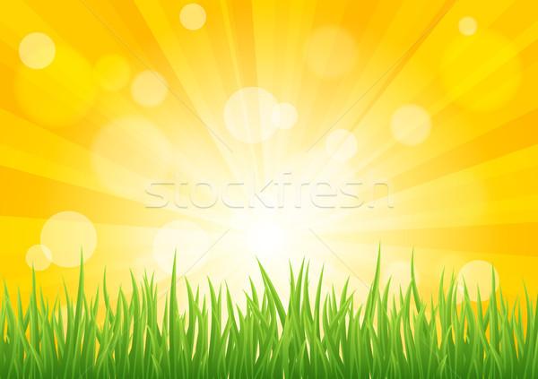 Parlak vektör güneş etki yeşil ot alan Stok fotoğraf © Designer_things