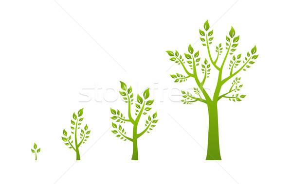 Green tree growth eco concept Stock photo © Designer_things