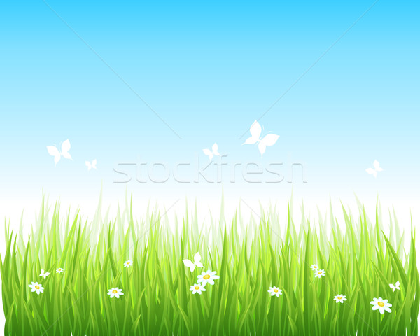 Grassy green field and blue sky Stock photo © Designer_things
