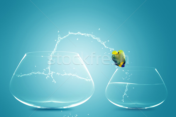 Stock photo: Anglefish jumping to small bowl