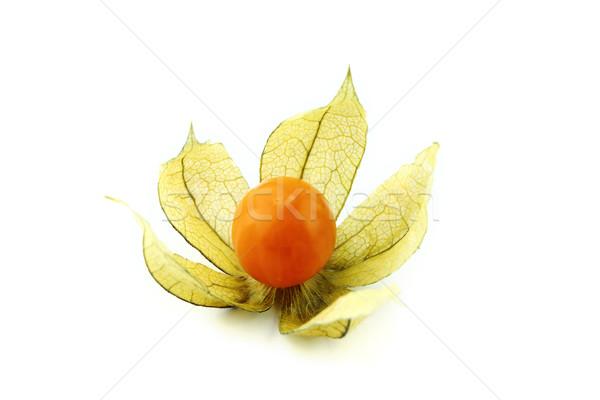 Stok fotoğraf: Yalıtılmış · beyaz · çiçek · arka · plan · turuncu · kış