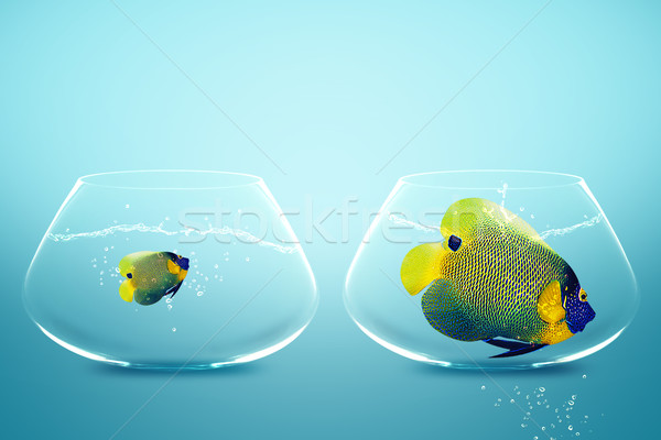 Large and small angelfish Stock photo © designsstock