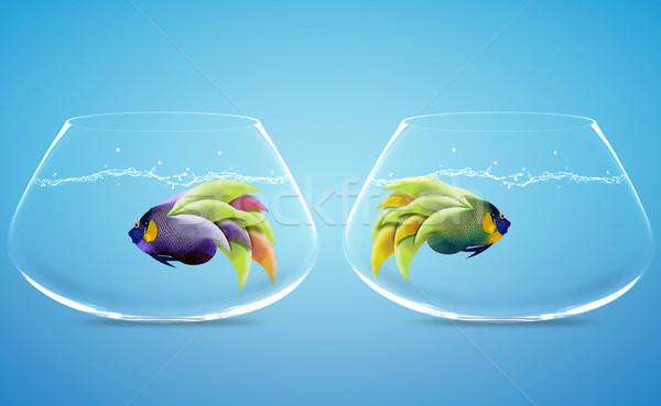 Fark yol iki çanaklar iş balık Stok fotoğraf © designsstock