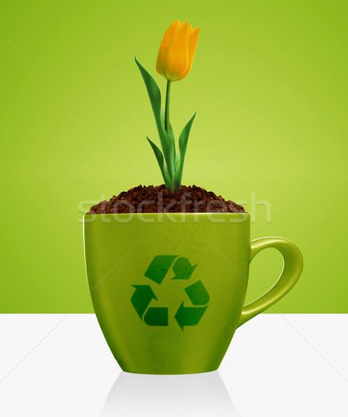 Ecológico conciencia jóvenes tulipán creciente verde Foto stock © designsstock