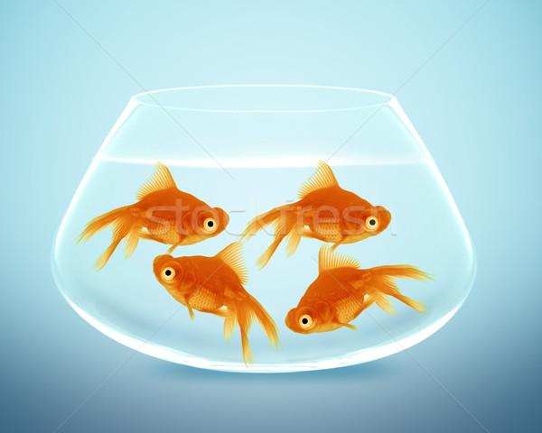 goldfish in small bowl Stock photo © designsstock