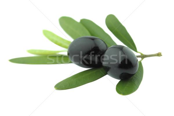 Azeitonas pretas folhas branco fruto planta oliva Foto stock © designsstock