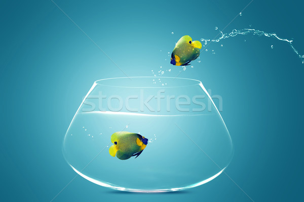 Angelfish jumbing to other bowl Stock photo © designsstock