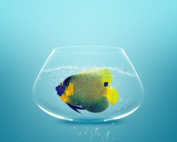 angelfish in small bowl Stock photo © designsstock