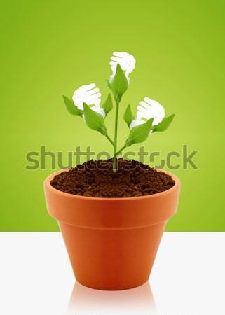 growing concept Stock photo © designsstock
