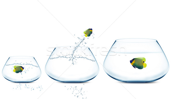 Stock photo: Anglefish jumping to Big bowl