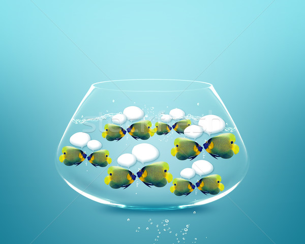 angelfish faces as social network with speech bubbles. Stock photo © designsstock