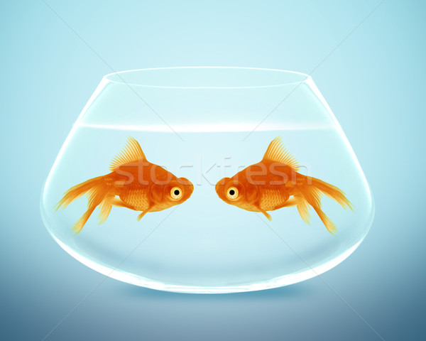 Two goldfish  falling in love Stock photo © designsstock