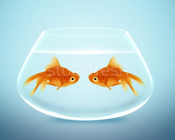 Zwei Goldfisch fallen Liebe verlieren Stock foto © designsstock