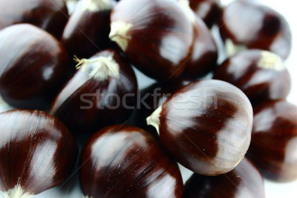 Sweet nature automne usine shell automne Photo stock © designsstock