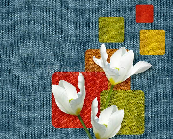 Flowers postcard Stock photo © designsstock