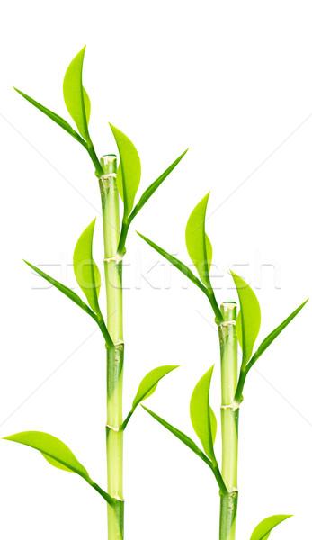 зеленый бамбук изолированный белый лист пространстве Сток-фото © designsstock