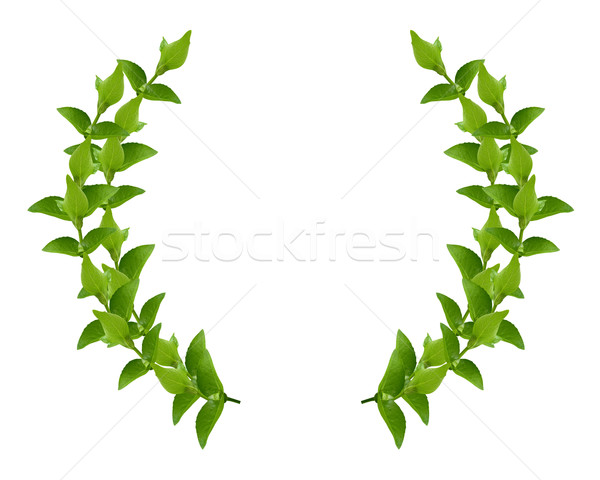 Wreath from Green leaves Stock photo © designsstock