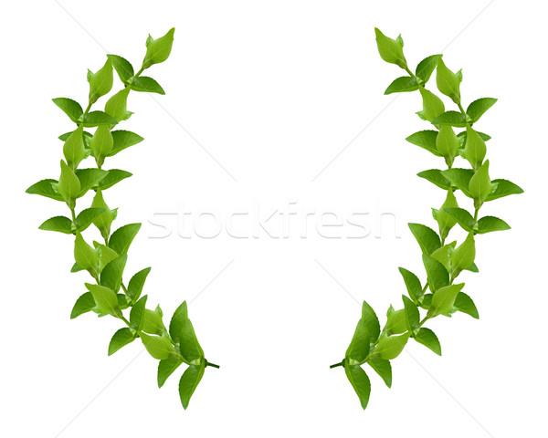 花輪 緑の葉 月桂樹 新鮮な 孤立した 白 ストックフォト © designsstock