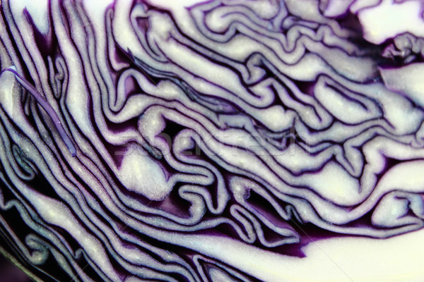 fresh red cabbage Stock photo © designsstock
