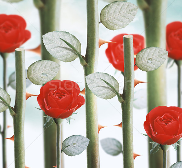yellow garden roses Stock photo © designsstock