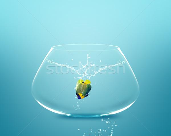 Anglefish jumping to Big bowl Stock photo © designsstock