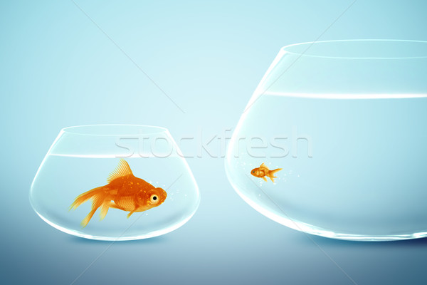 Big and small goldfish  Stock photo © designsstock