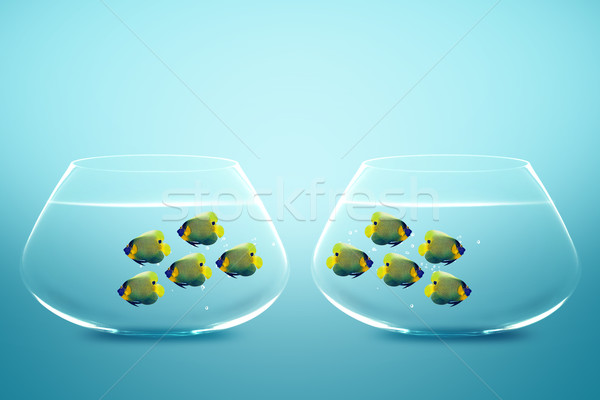 Two group of Enemies angelfish in two fishbowls Stock photo © designsstock