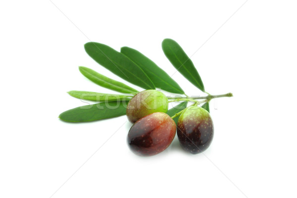 Aceitunas negras hojas blanco frutas planta de oliva Foto stock © designsstock